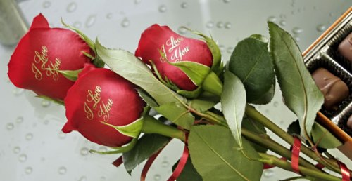 red_roses1