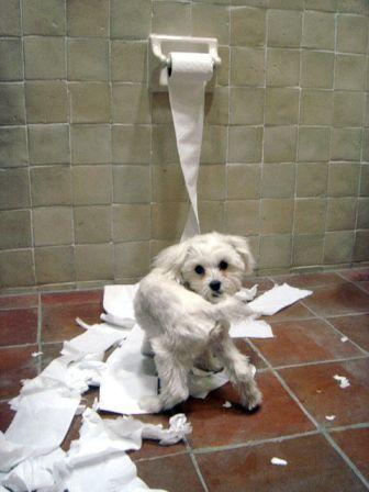 dog help