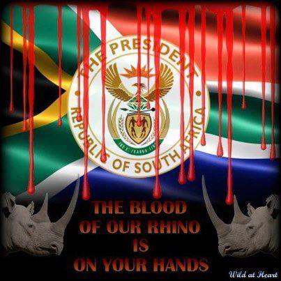 rhinoblood