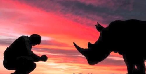 rhinosuffering