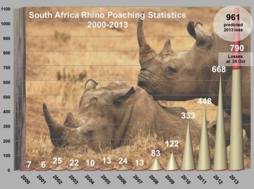 rhinostats2013