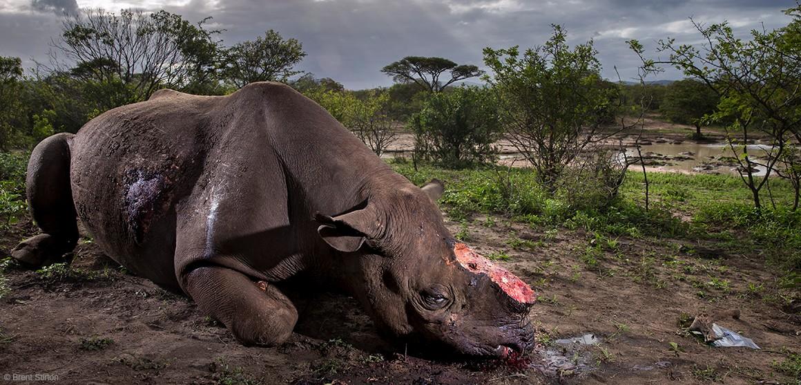 rhino photographer of the year 2017